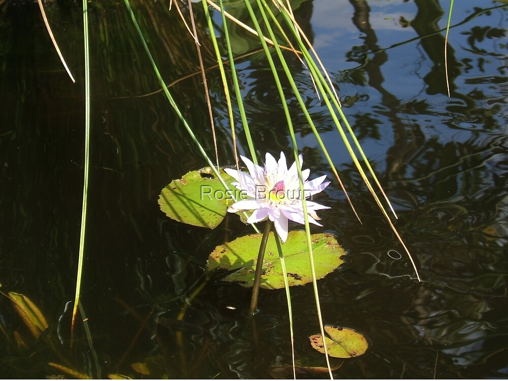 Queen of the Pond by Rosie Brown
