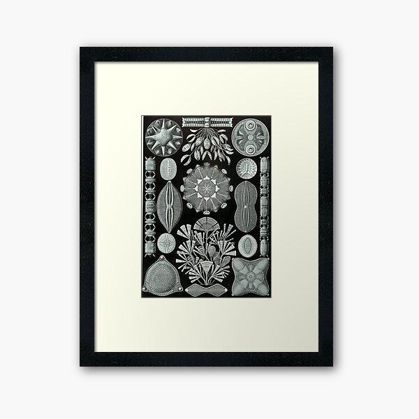 Haeckel Diatomea Framed Art Print