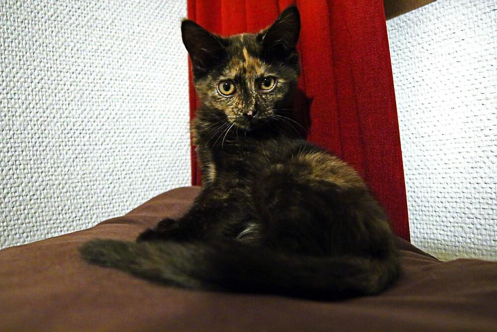 Soli the tortie cat #2 by Nicky Mezzina