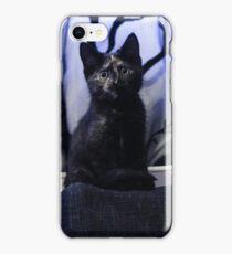 Soli the tortie cat #1 iPhone Case/Skin