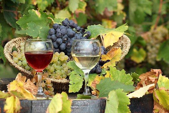 wine  by goceris