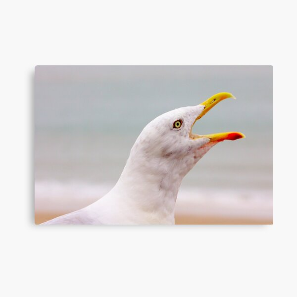 Hungry Seagull with an Open Beak Canvas Print