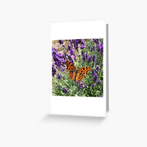 A Beautiful Butterfly on my Lavender by Rochelle McConnachie Greeting Card
