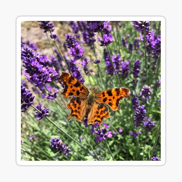 A Beautiful Butterfly on my Lavender by Rochelle McConnachie Sticker
