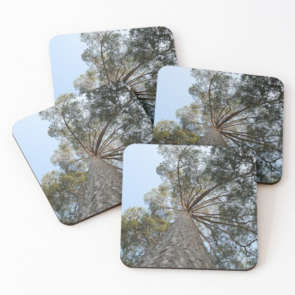 Up view of tree and sunlight effect Coasters (Set of 4)