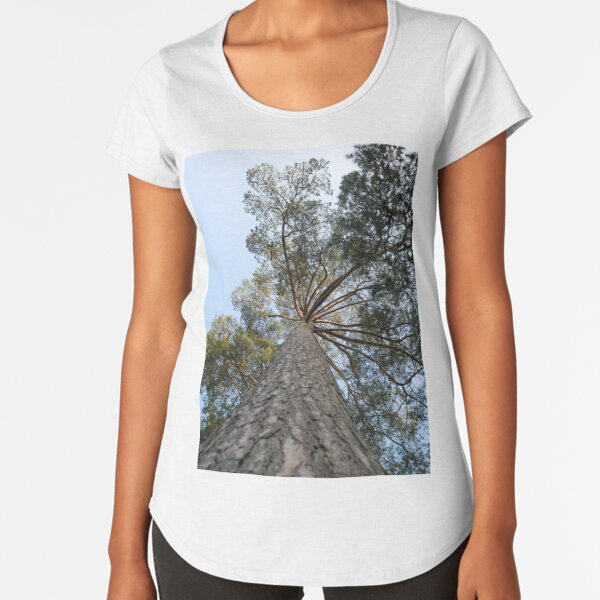 Up view of tree and sunlight effect Premium Scoop T-Shirt