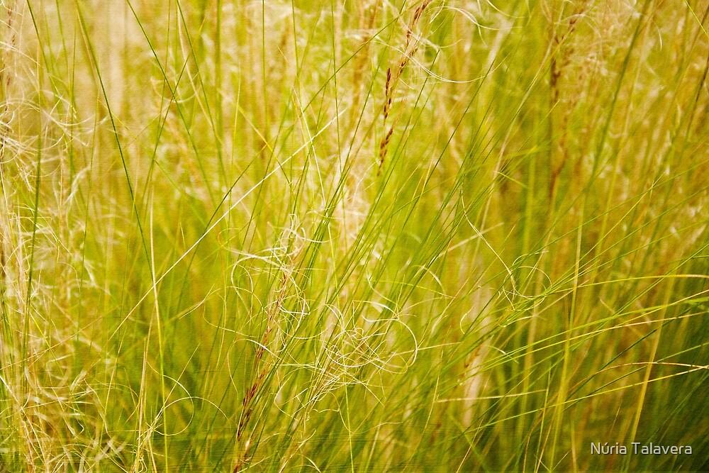 Grass by Núria Talavera