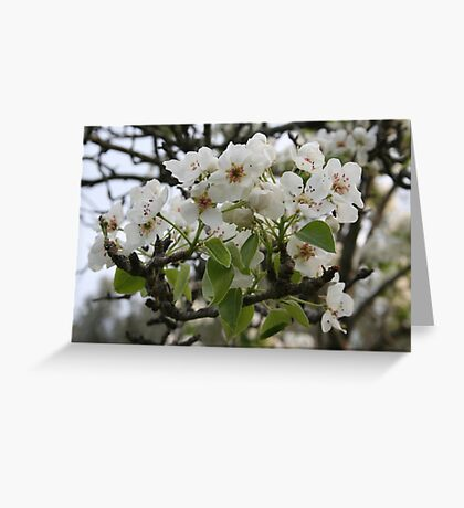 Beautiful Apple Blossom Greeting Card