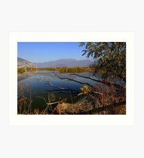 Ponds  Art Print