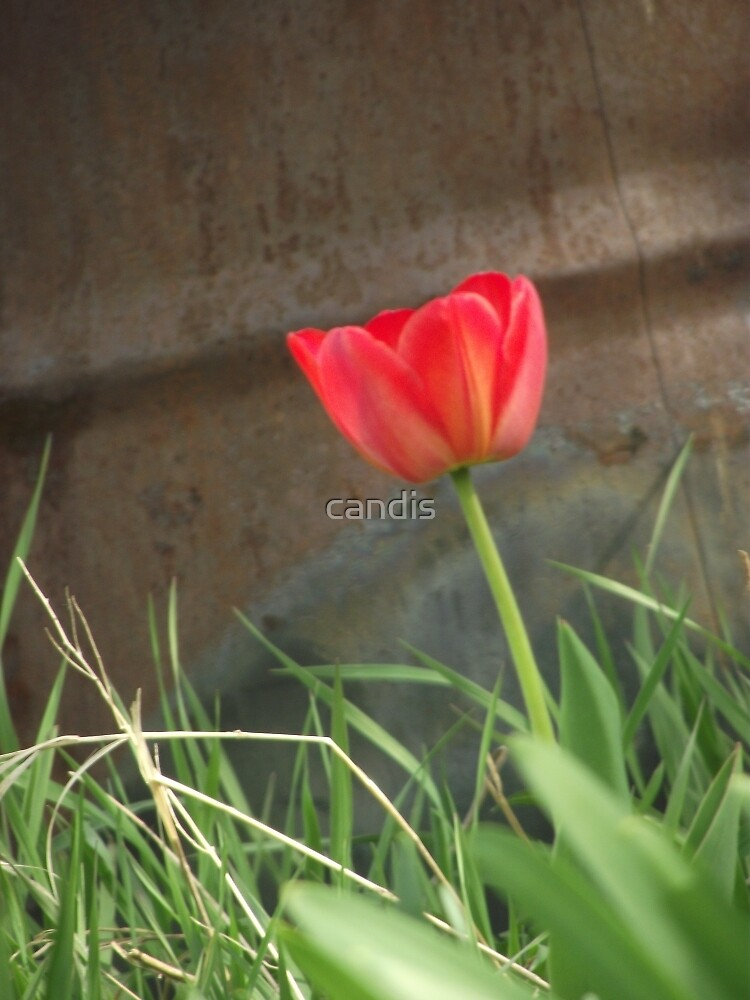 red on rust by candis