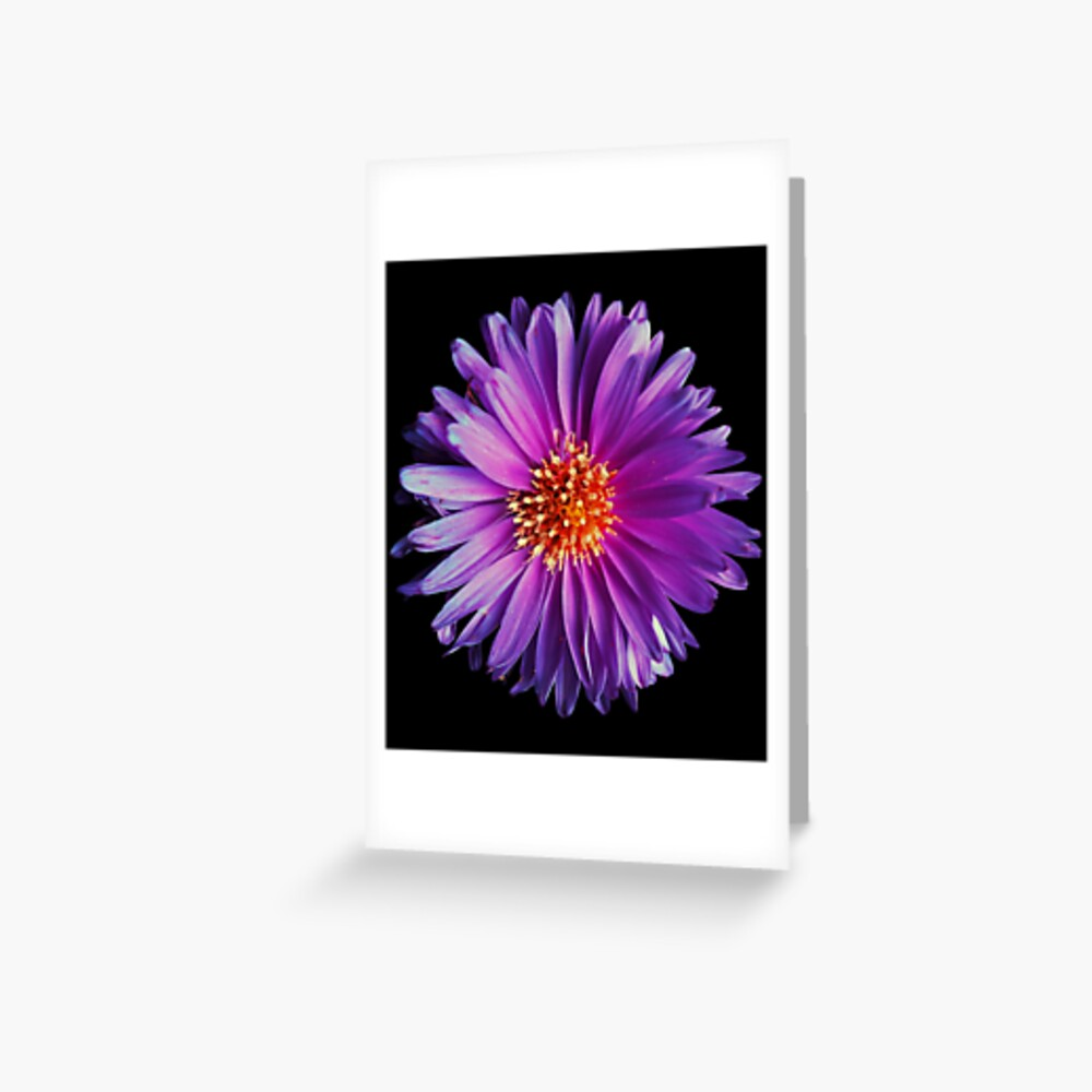 Wild purple african daisy flower photo Greeting Card