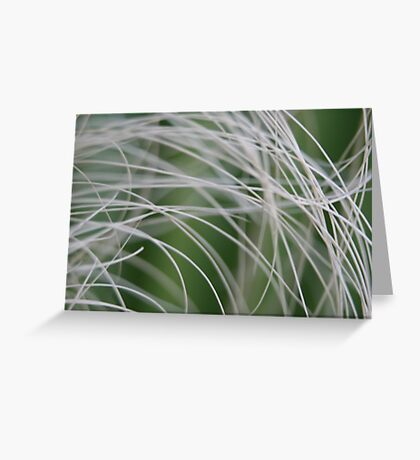 Rainforest Palm Tree Leaf Close Up Greeting Card