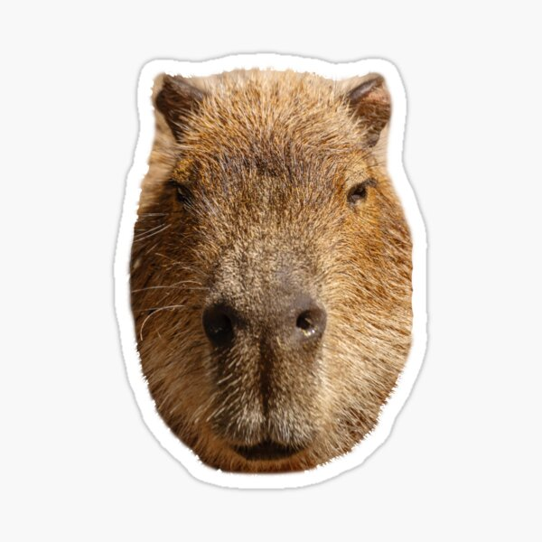 Capybara face Sticker