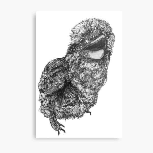Nelson the Kookaburra Metal Print