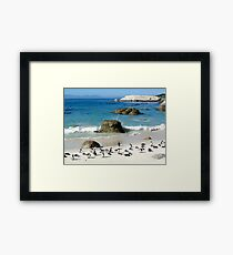 South African Penguins Framed Print