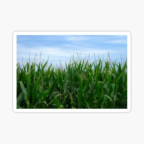 Country Corn Field Sticker