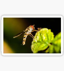 Resting Hover Fly Sticker