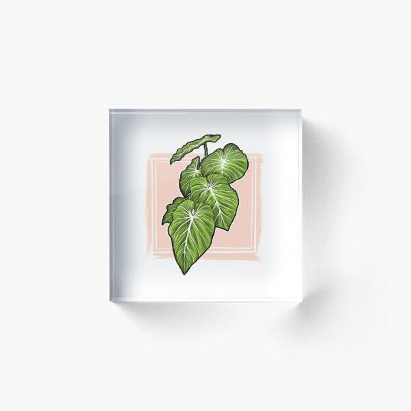 Philodendron Gloriosum Print Acrylic Block