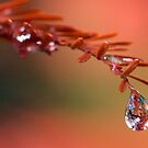 secret in a rain drop by David Tovey