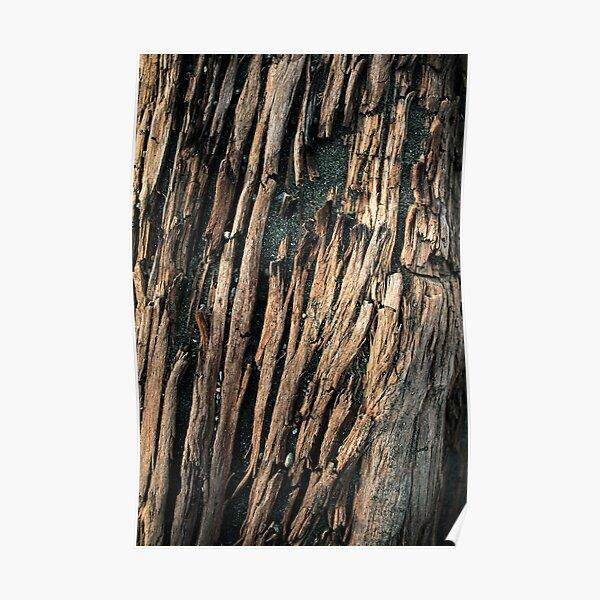drift wood I Poster