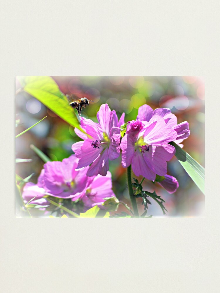 Alternate view of Summer Flowers Photographic Print