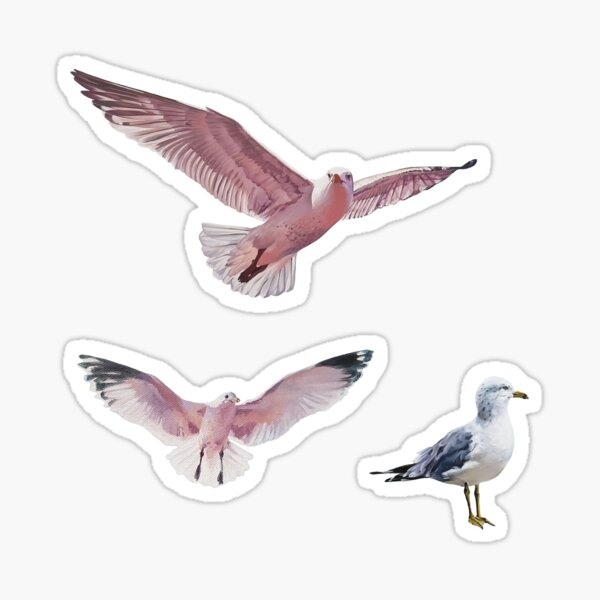 Painted Gulls Sticker Set Sticker