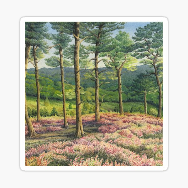 Evening Sun, Surrey Hills Pine Trees Sticker