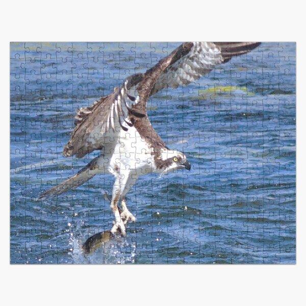 Watercolor Bird, Osprey 12, Yellowstone, Wyoming Jigsaw Puzzle