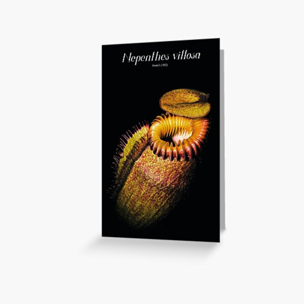 Nepenthes villosa Greeting Card