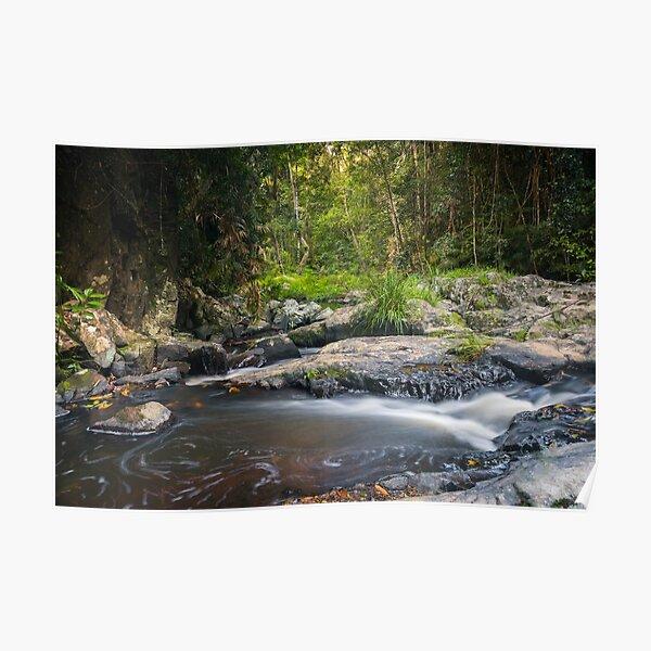 Junmrum Creek in Australian Rainforest Poster