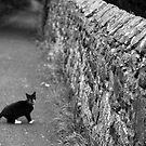 Cat in Scotland  by anniemgo
