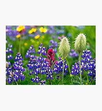 Wildflowers at Mount Rainier Photographic Print