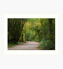 Trail throught the Forest Art Print