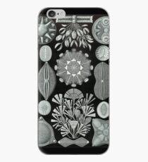 Haeckel Diatomea iPhone Case
