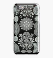 Haeckel Diatomea iPhone Case/Skin