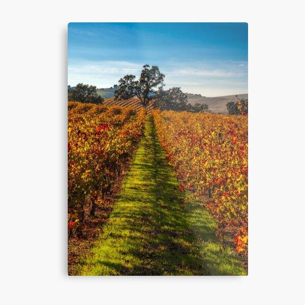 Paso Robles Vineyard Metal Print