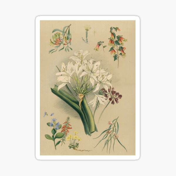 South Australian Botany - native flowers Sticker