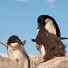 """Adelie Penguin and chicks ~ """"and WHEN do I get fed!!"""" by Robert Elliott"""