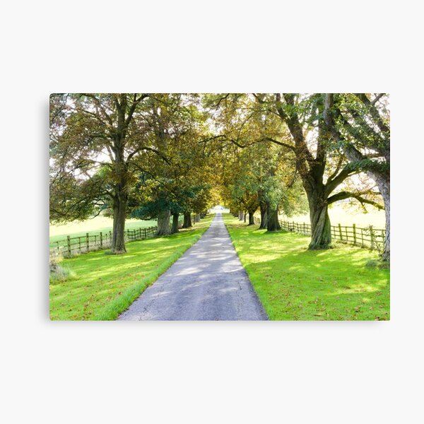 Tree casting shadows over a country track Canvas Print