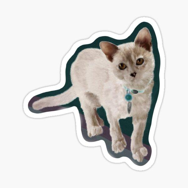 Burmese Kitten (Sticker) Sticker
