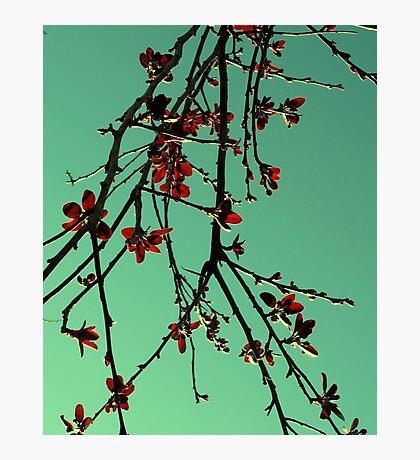 Orientique Photographic Print