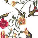 Hummingbirds by JeniMay
