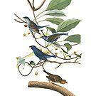 Indigo Bird by JeniMay