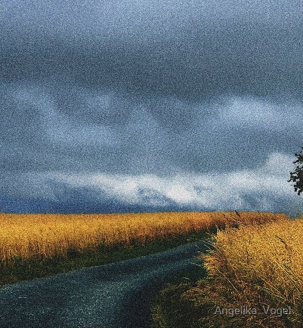The Path through the Cornfield by Angelika  Vogel