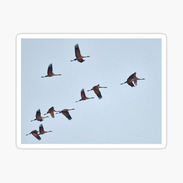 Going south. Eurasian crane fall migration Sticker