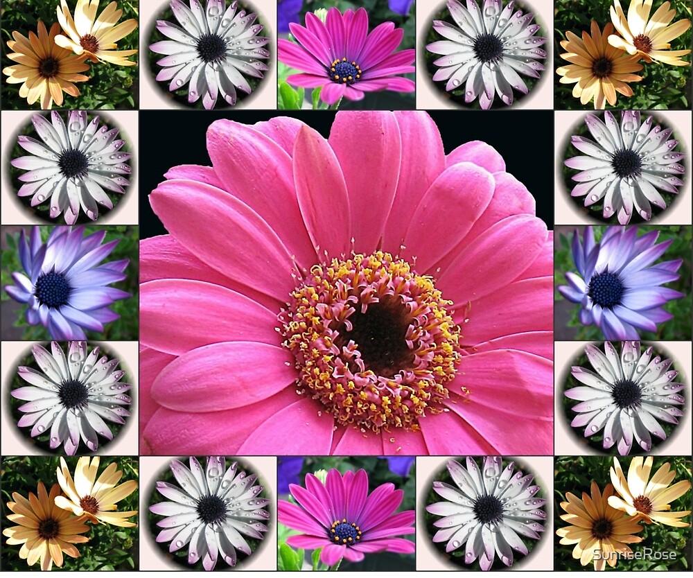 Dazzling Daisies Collage by SunriseRose