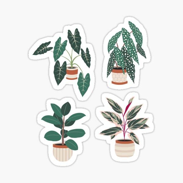 Beautiful house plants in pots Sticker