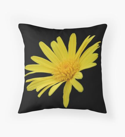 Yellow Daisy Flower Isolated Throw Pillow