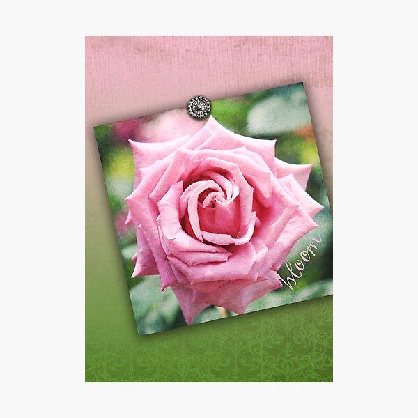 Hybrid Tea Rose Pink Vintage Texture Ornamental Pattern Photographic Print