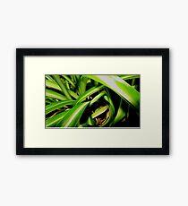 Close up jungle Framed Print